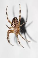 Spider web against white background